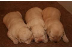 9. deò (13.9.2012) chlapci
