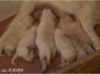 Spoločné foto - šteniatka
